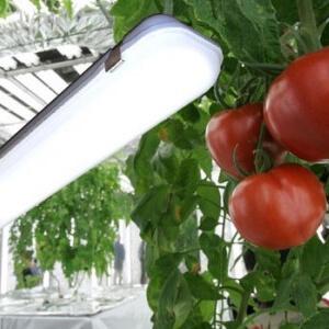 Светодиодное освещение в сельскохозяйственном секторе Украины